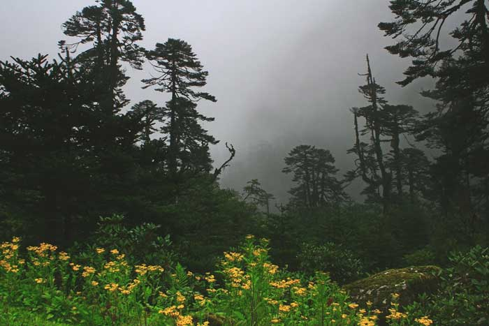 Reasons Why Sikkim Should Be Your Next Vacation Destination