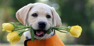2014-10-Cute-Dog-Pictures-42