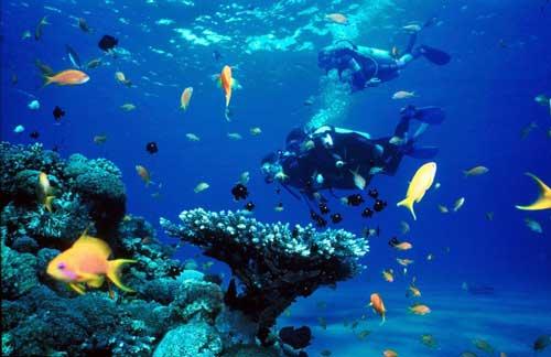 scuba-diving-12