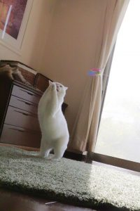 Cat new 3