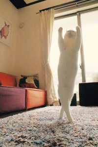 cat new 1