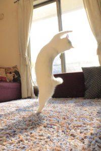 cat new 2