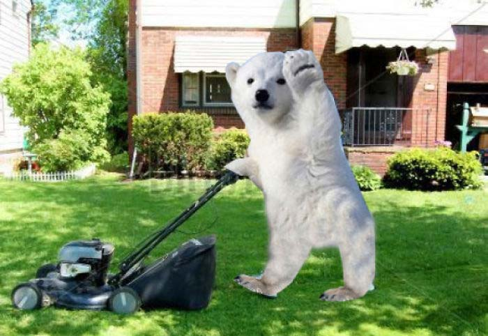 photoshopped memes of a polar bear cub waving 39 hi 39 to the. Black Bedroom Furniture Sets. Home Design Ideas