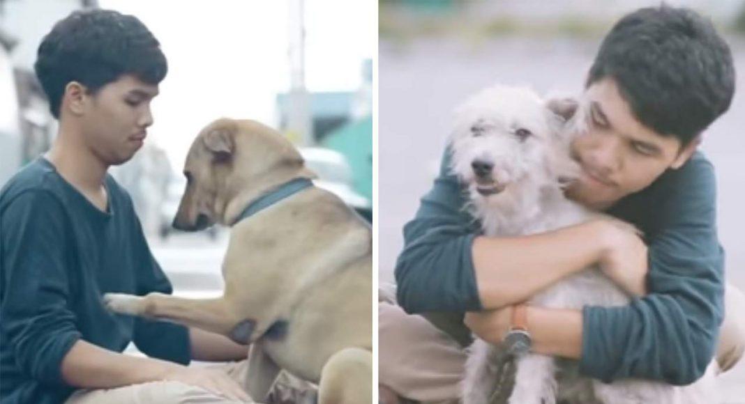 Stray-Dogs-First-Hug