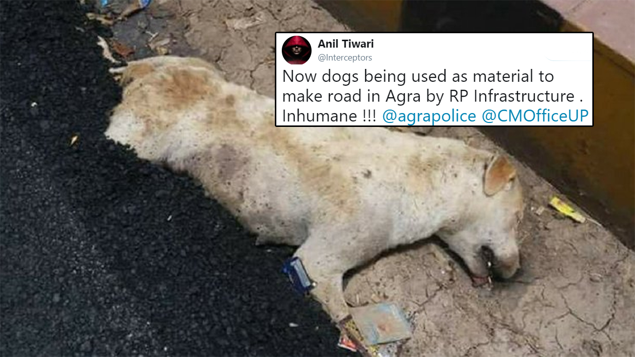 Agra Construction Company Builds Road Over A Dog's Body, Furious Twitter Gets Police Involved