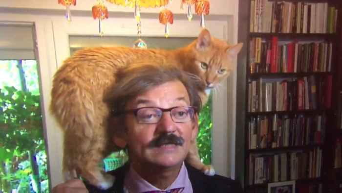 Red cat almost  ruined an interview and became an Internet star
