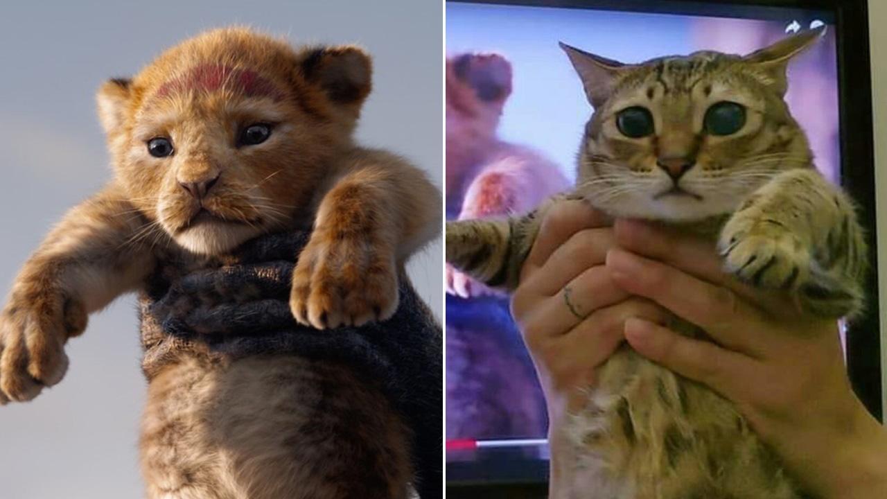fans recreate simba u0026 39 s intro scene from  u0026 39 the lion king