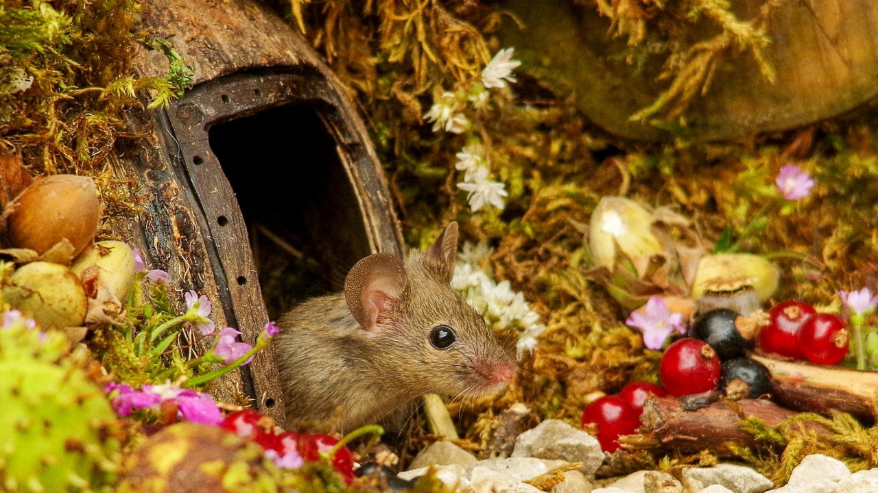 Man Builds House For Family Of Mice In His Backyard
