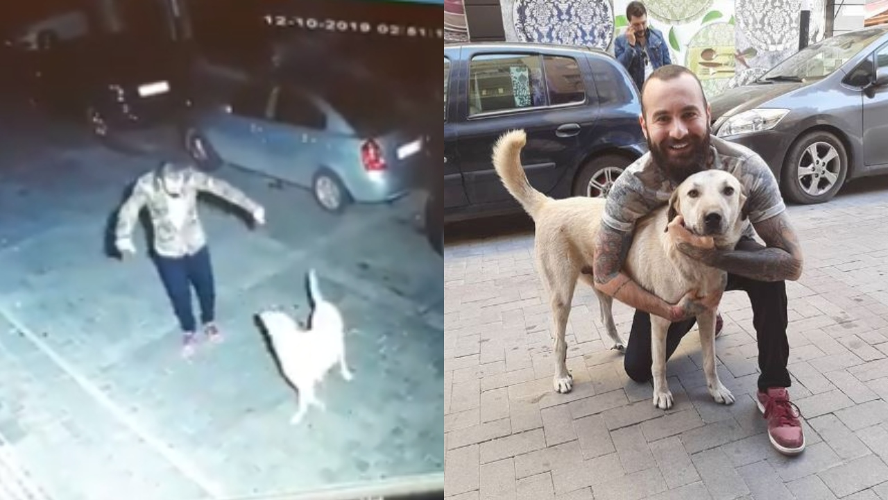 Man's Happy Dance With A Stray Dog At Midnight Ends With Them Becoming BFFs