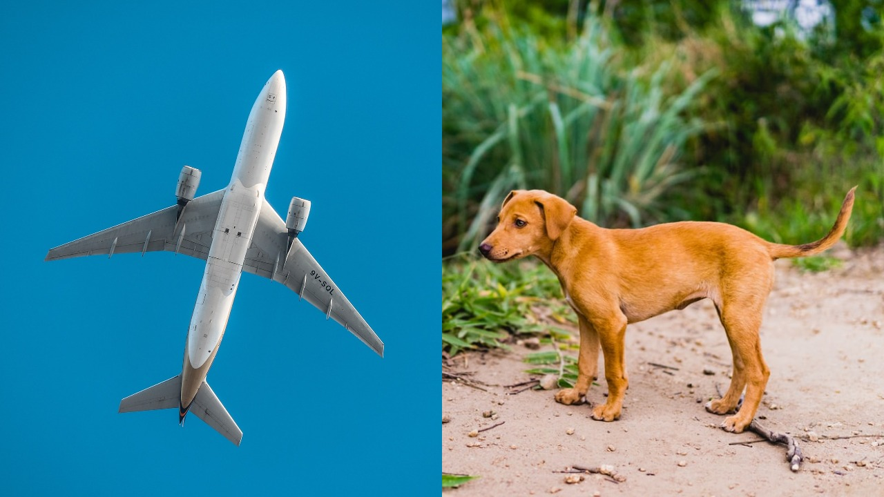 4-Month-Old Kerala Stray Dog Ready To Fly To Switzerland After Being Adopted By Tourists