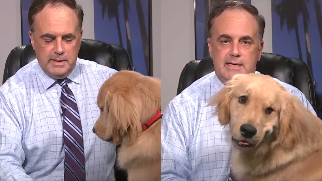 Dog Interrupts Live Weather Forecast, Sits On News Anchor's Lap During Session