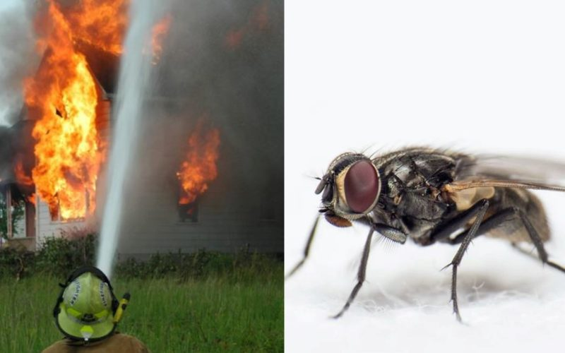 Man chasing fly accidentally blows up part of house
