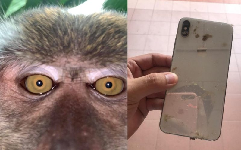 Monkey takes selfies after stealing student's phone