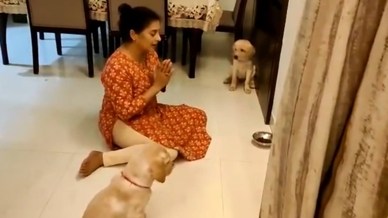 Desi Woman Teaches Her Labrador Pups To Pray Before Eating, Twitter Calls Them 'Good Bois'